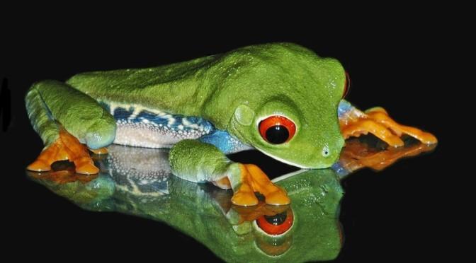 nature frogs 1650x1200 wallpaper_www.wallpaperhi.com_48